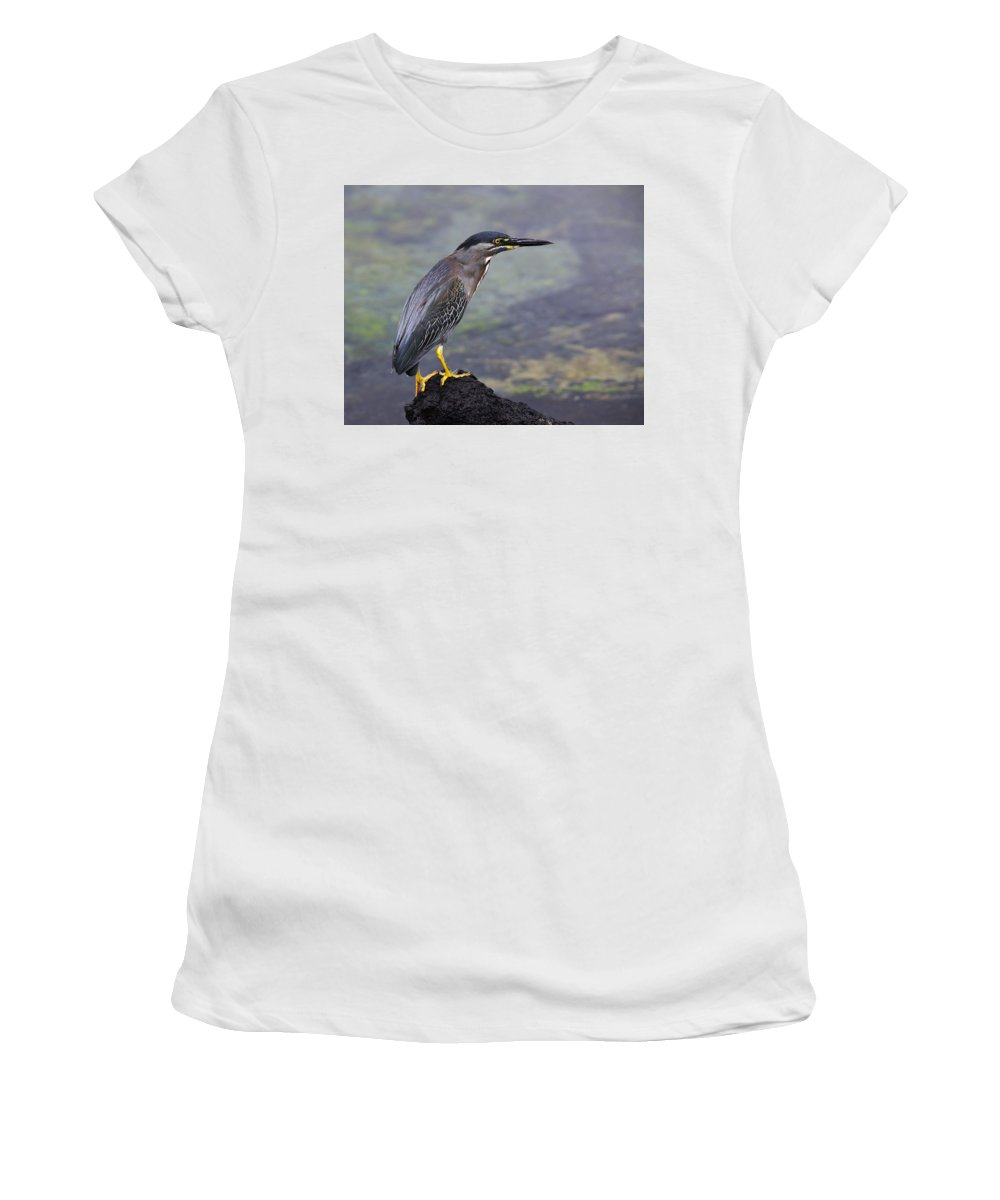 Striated Heron Women's T-Shirt (Athletic Fit) featuring the photograph Striated Heron by Tony Beck