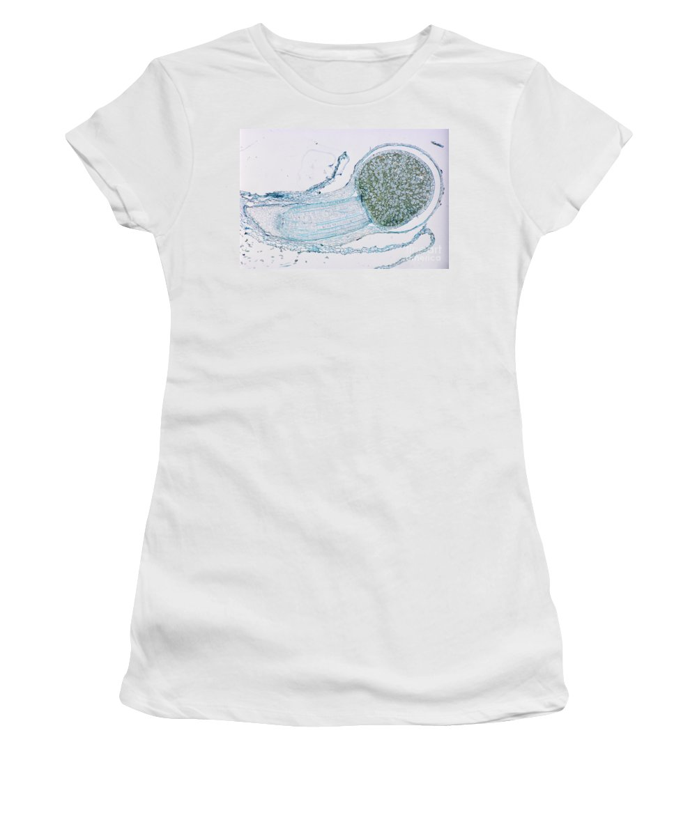 Plant Women's T-Shirt featuring the photograph Strobilus On Horsetail Plant by M. I. Walker