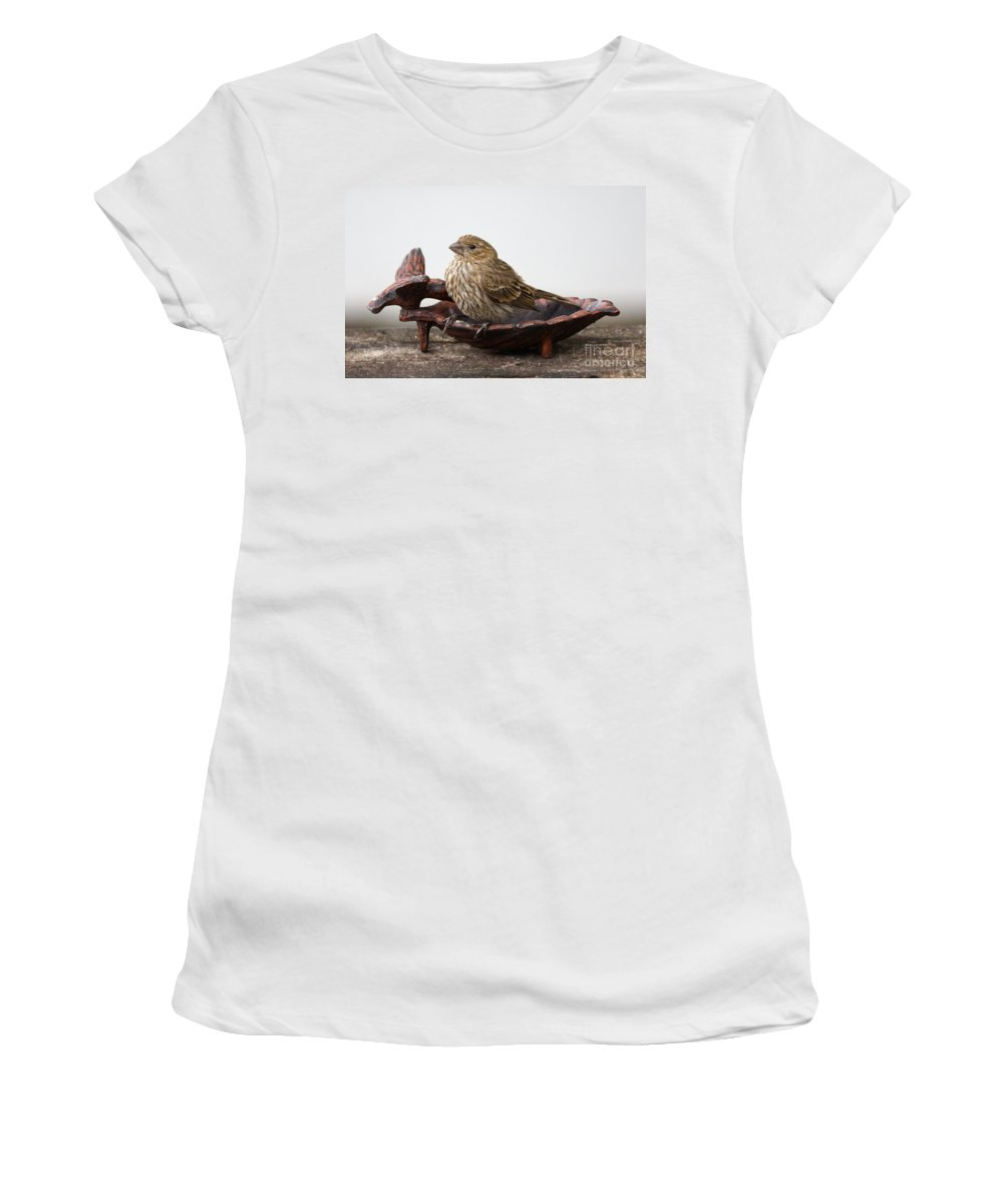 House Finch Women's T-Shirt featuring the photograph Waiting For Food by Lori Tordsen