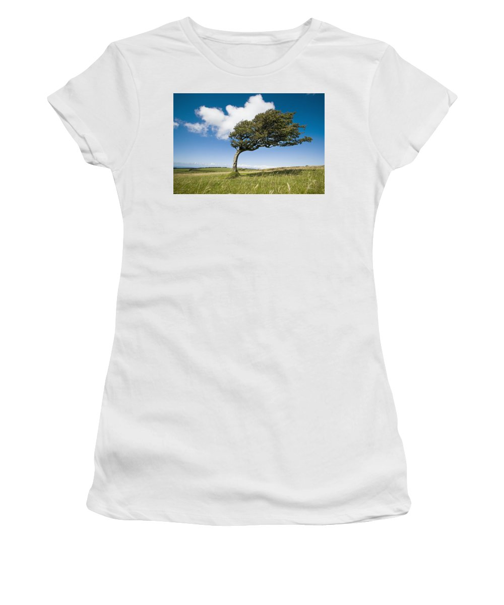 Photography Women's T-Shirt (Athletic Fit) featuring the photograph Wind-swept Solitary Tree On Open Grassy by Axiom Photographic