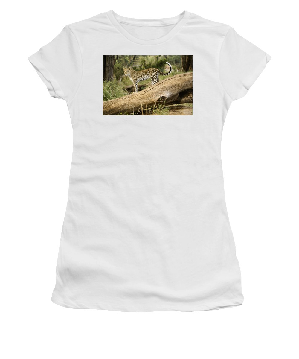 Africa Women's T-Shirt (Athletic Fit) featuring the photograph Leopard In The Forest by Michele Burgess