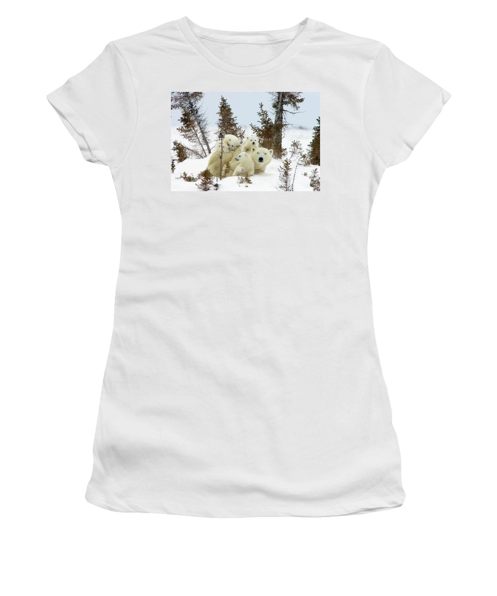 Mp Women's T-Shirt featuring the photograph Polar Bear Ursus Maritimus Trio by Matthias Breiter