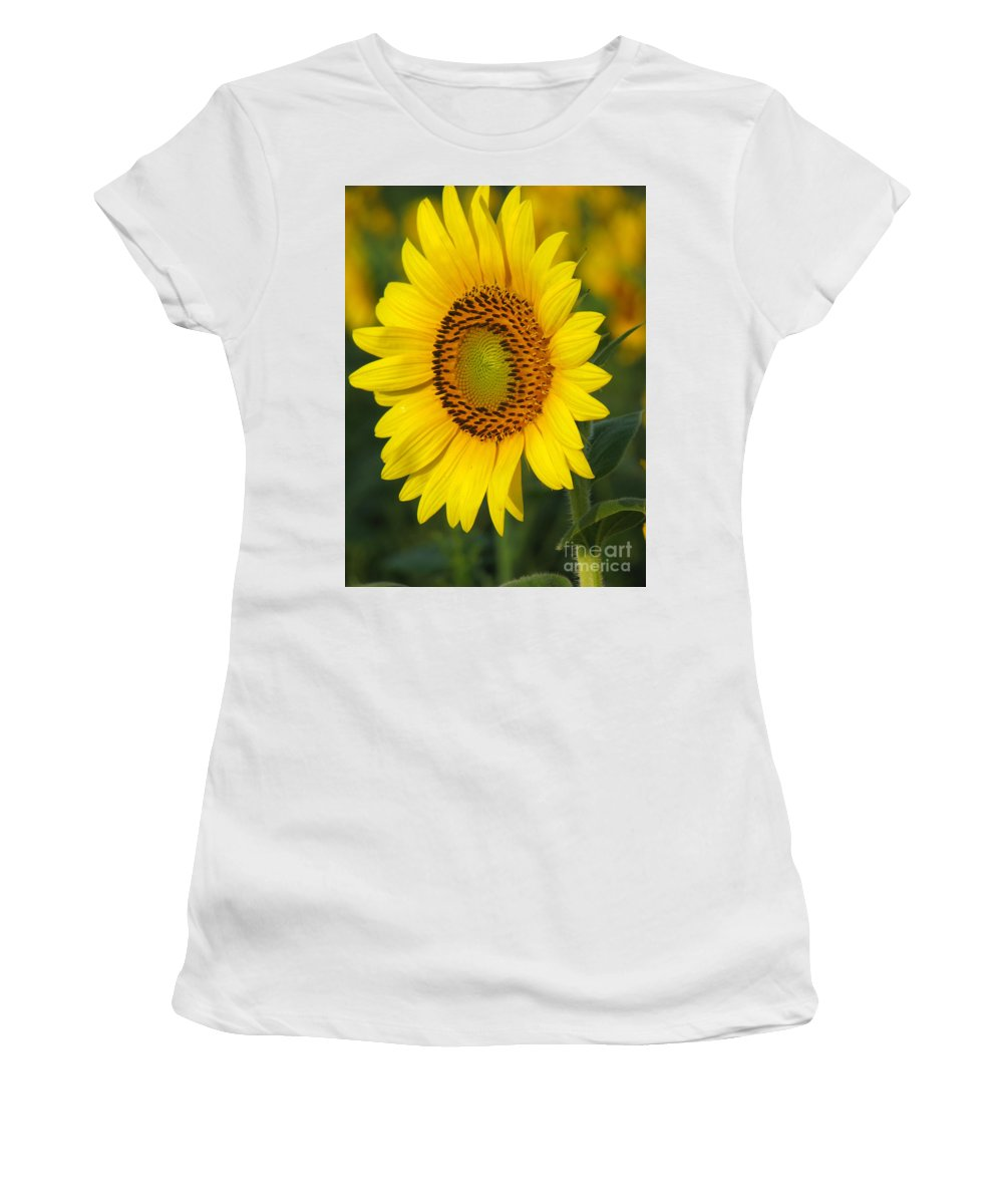 Sunflowers Women's T-Shirt (Athletic Fit) featuring the photograph Sunflower by Amanda Barcon