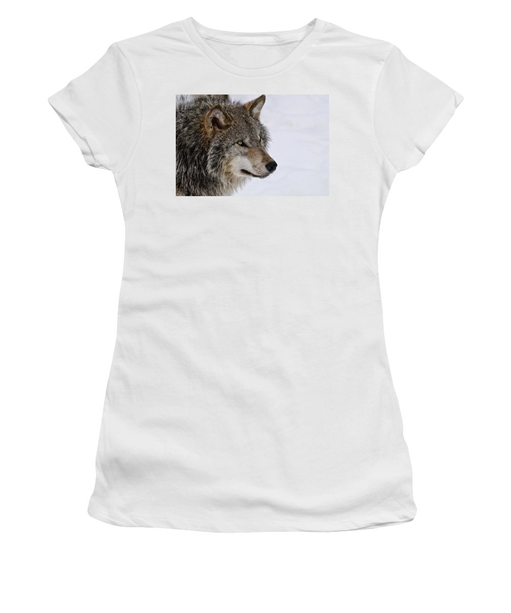 Michael Cummings Women's T-Shirt (Athletic Fit) featuring the photograph Timber Wolf by Michael Cummings