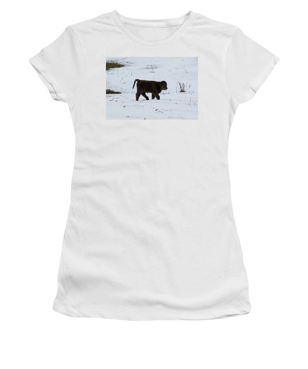 Highland Cows Women's T-Shirt (Athletic Fit) featuring the photograph Baby by Donald Crosby