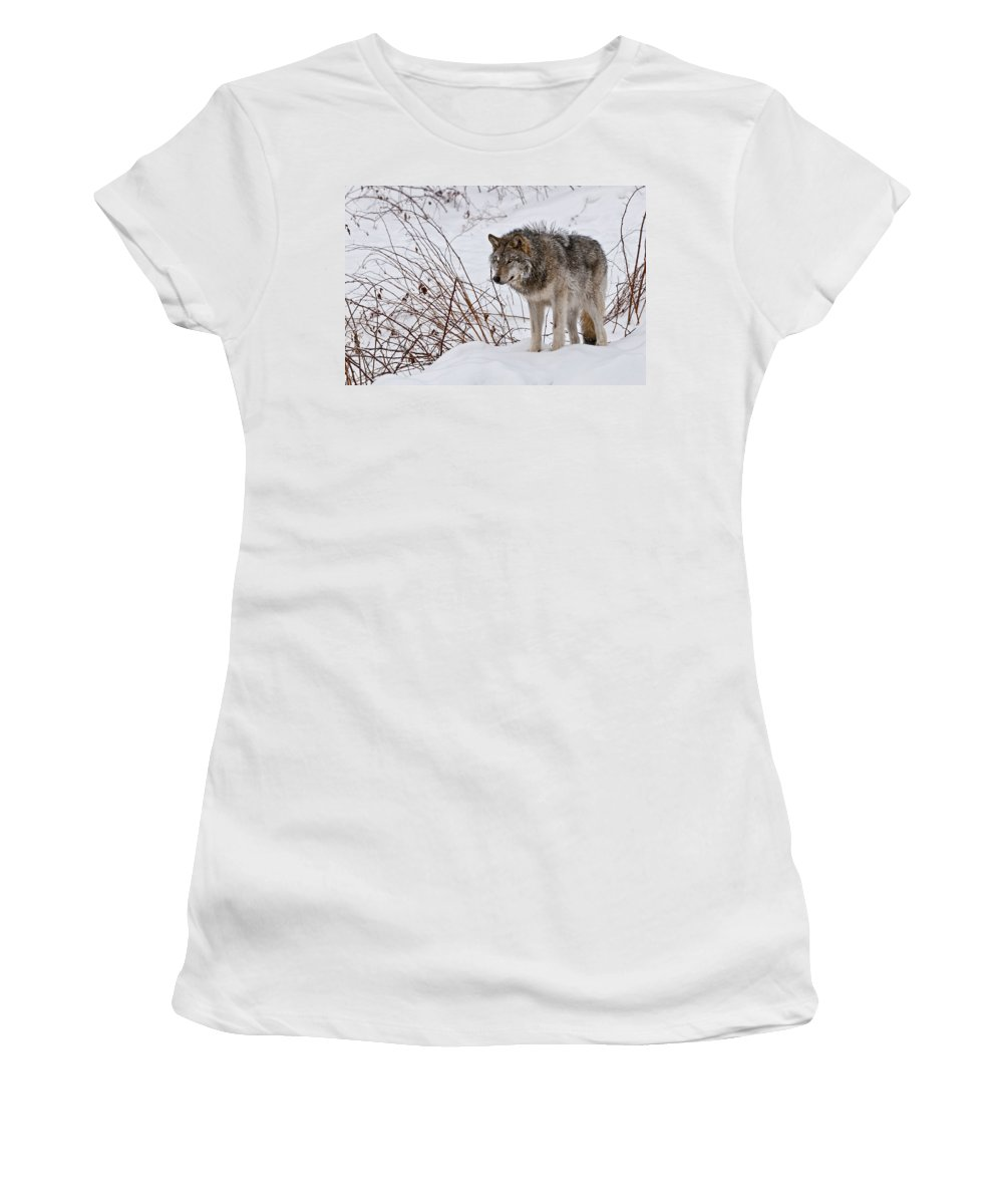 Michael Cummings Women's T-Shirt featuring the photograph Timber Wolf In Winter by Michael Cummings