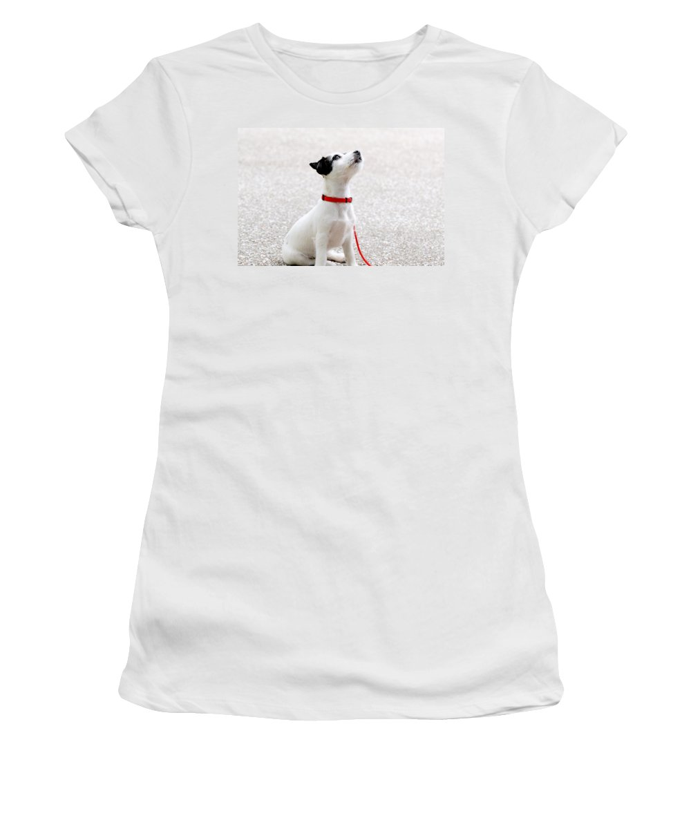 Dog Women's T-Shirt (Athletic Fit) featuring the photograph Dog by FL collection