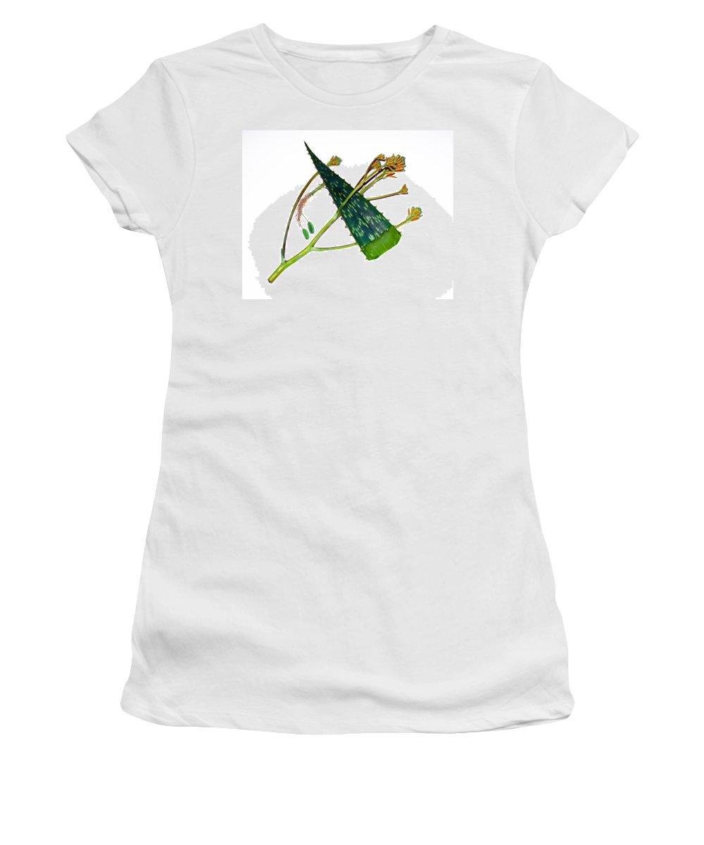 Aloe; Vera; Medicine; Properties; Medicinal; Ailments; Biblical; Ointment; Burns; Burn; Cuts; Rash; Women's T-Shirt (Athletic Fit) featuring the photograph Aloe Vera by Allan Hughes