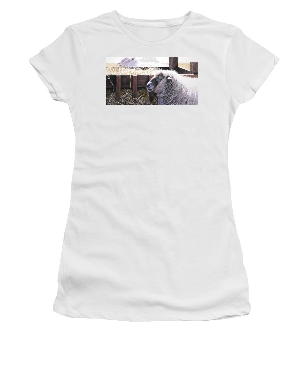 Sheep Women's T-Shirt (Athletic Fit) featuring the painting At Rest by Denny Bond