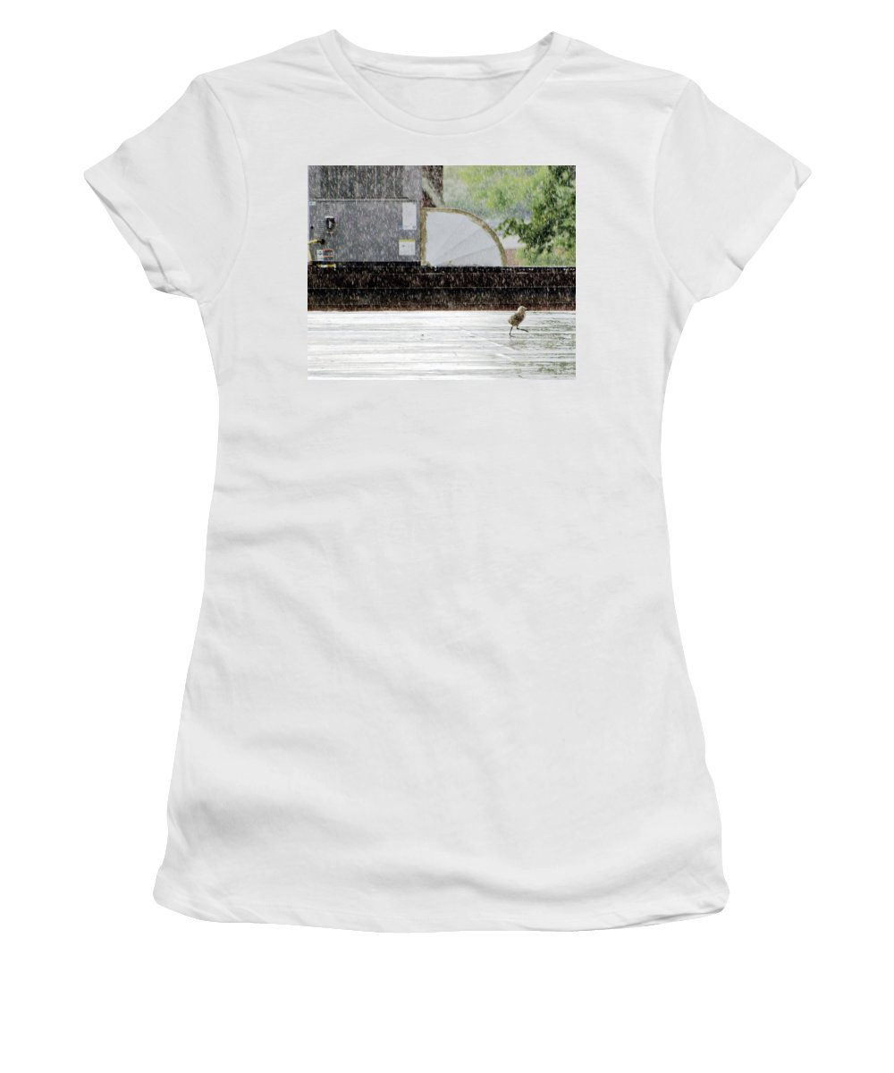 Animal Women's T-Shirt (Athletic Fit) featuring the photograph Baby Seagull Running In The Rain by Bob Orsillo
