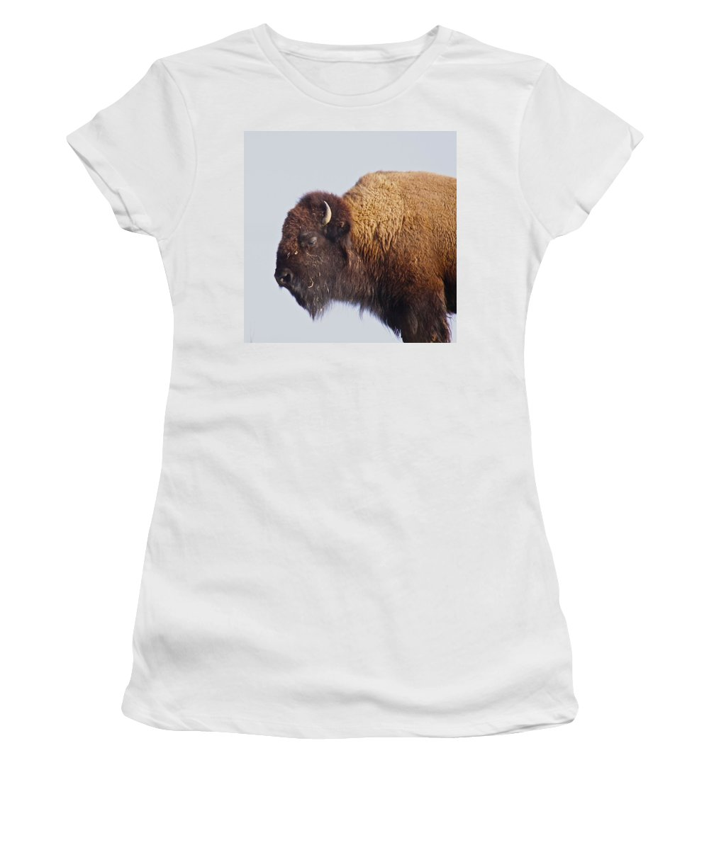 Animal Women's T-Shirt (Athletic Fit) featuring the photograph Baffalo by Robert Pearson