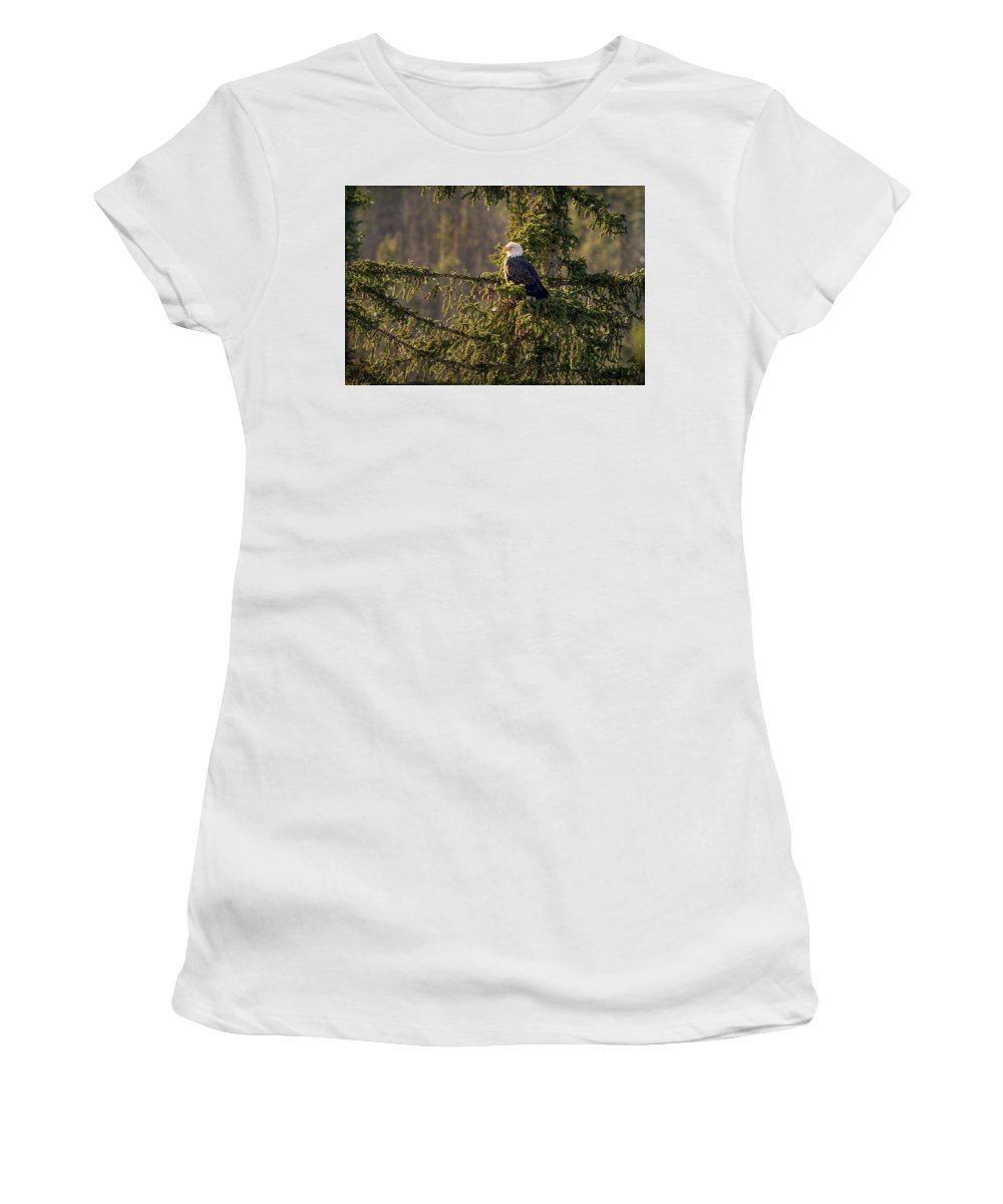 Bald Eagle Women's T-Shirt (Athletic Fit) featuring the photograph Bald Eagle In Pine by Vicki Stansbury