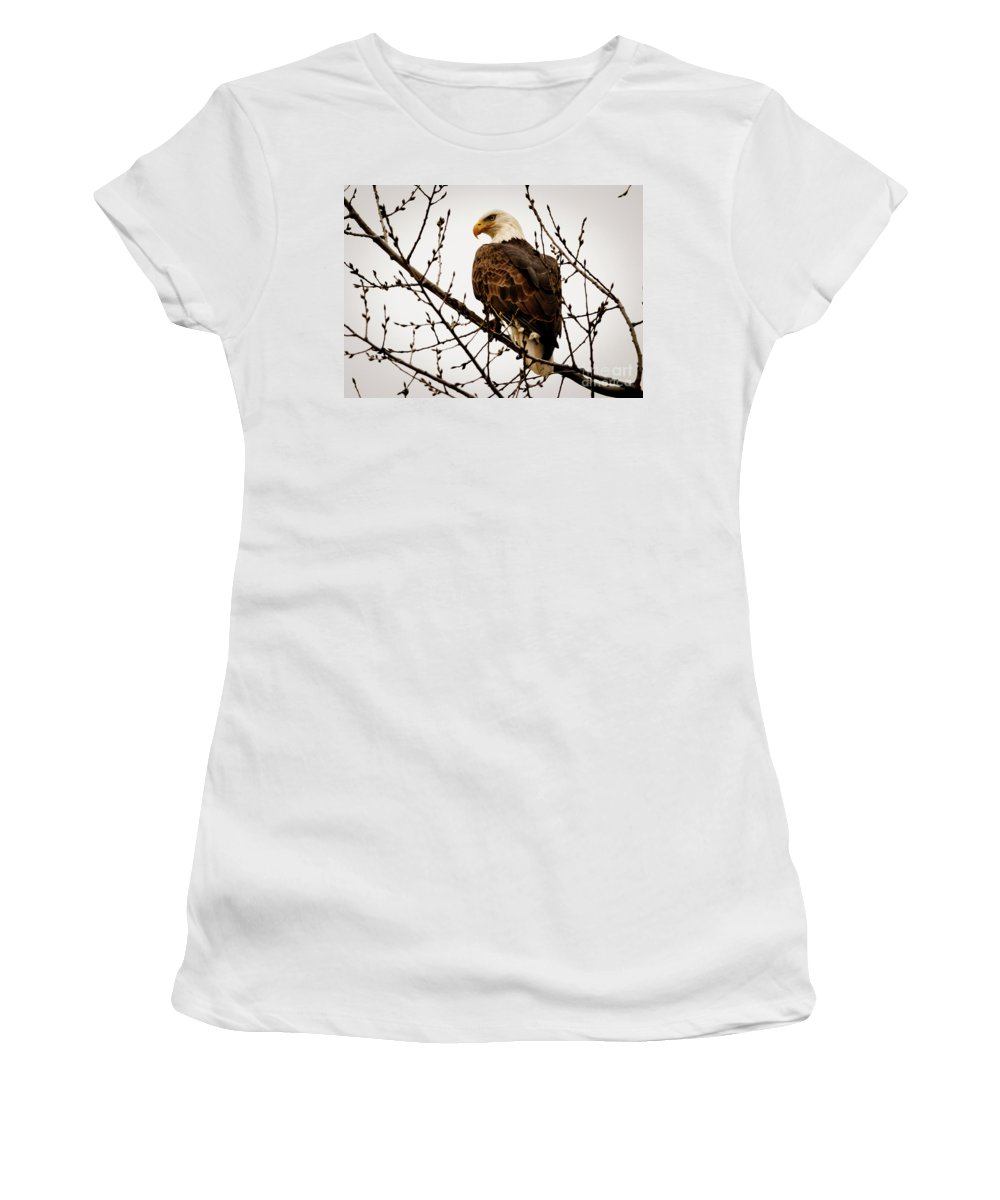 Bald Eagle Women's T-Shirt (Athletic Fit) featuring the photograph Bald Eagle by Lowell Stevens
