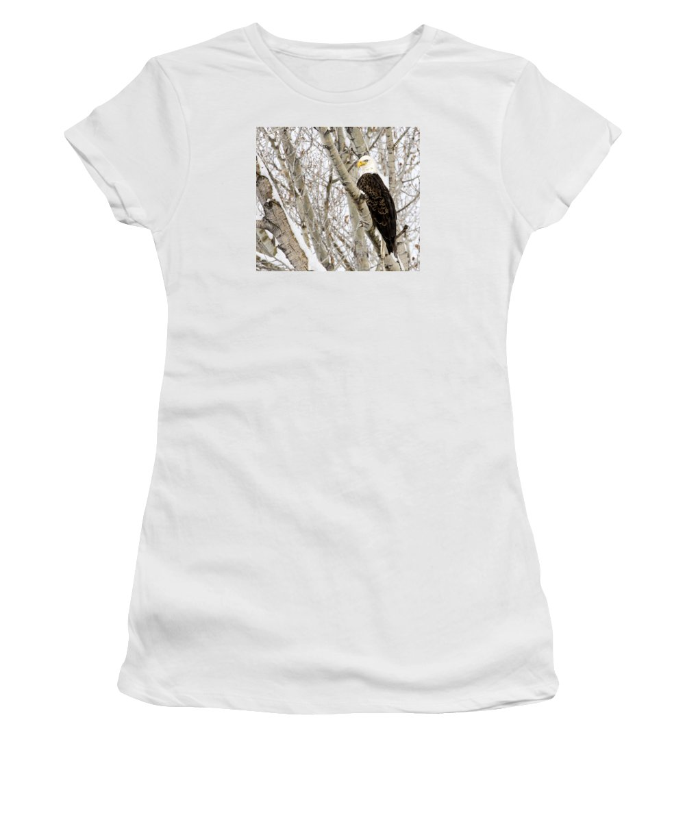 Bald Eagle Women's T-Shirt (Athletic Fit) featuring the photograph Bald Eagle by Sheryl Saxton