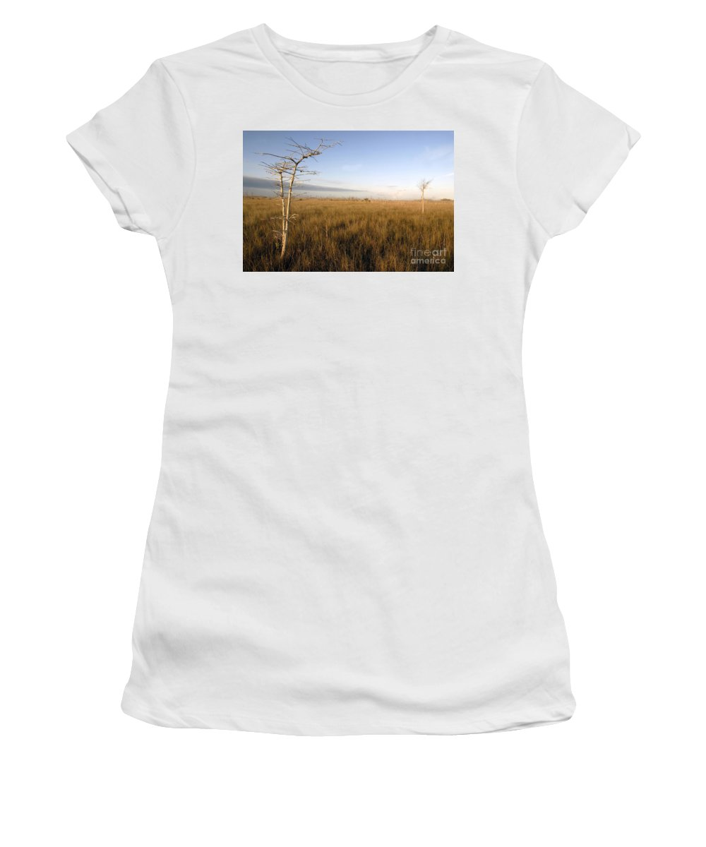 Bald Cypress Women's T-Shirt featuring the photograph Big Cypress by David Lee Thompson