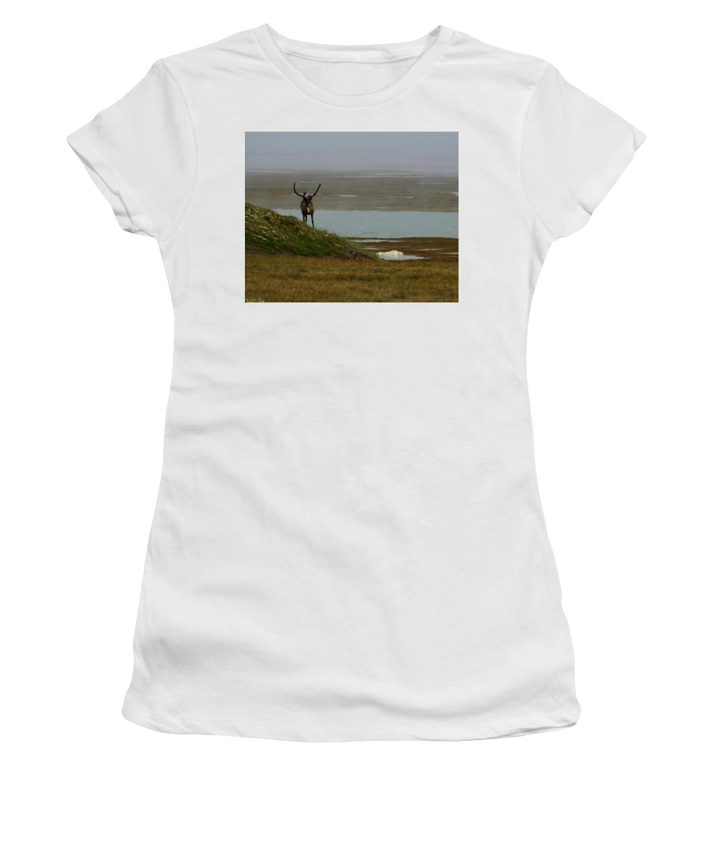 Caribou Women's T-Shirt (Athletic Fit) featuring the photograph Caribou Fog by Anthony Jones