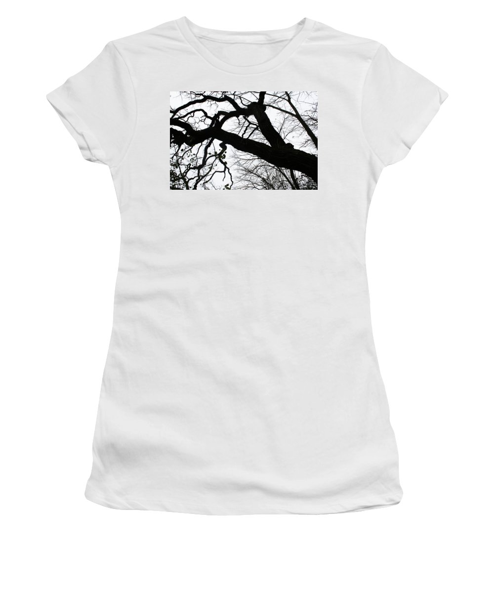 Tree Women's T-Shirt (Athletic Fit) featuring the photograph Climbing Up by Jamie Lynn
