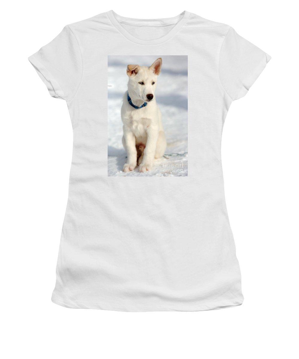 Dog Women's T-Shirt featuring the photograph Dog Eared by Kristin Yata