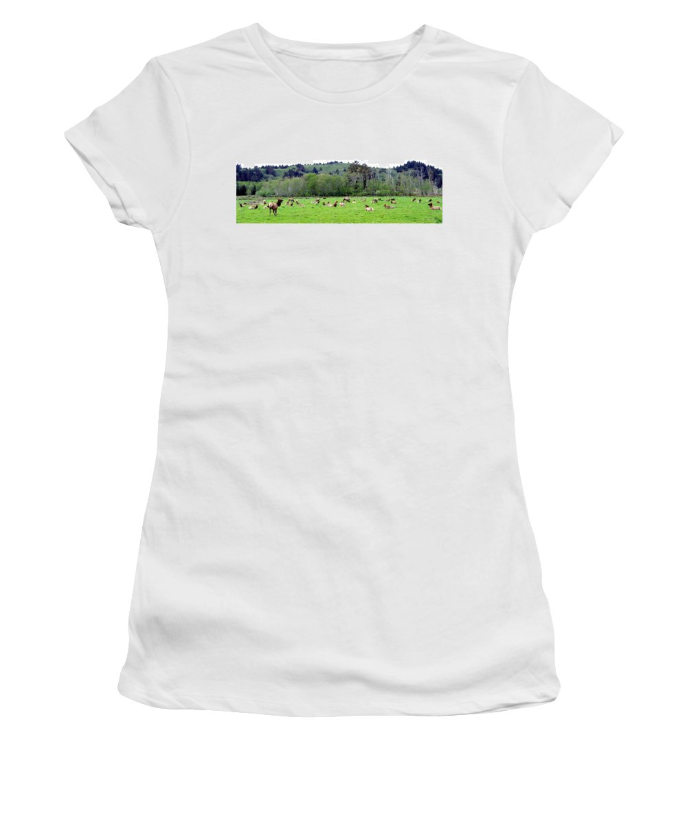 Elk Women's T-Shirt (Athletic Fit) featuring the photograph Elk Herd by Will Borden