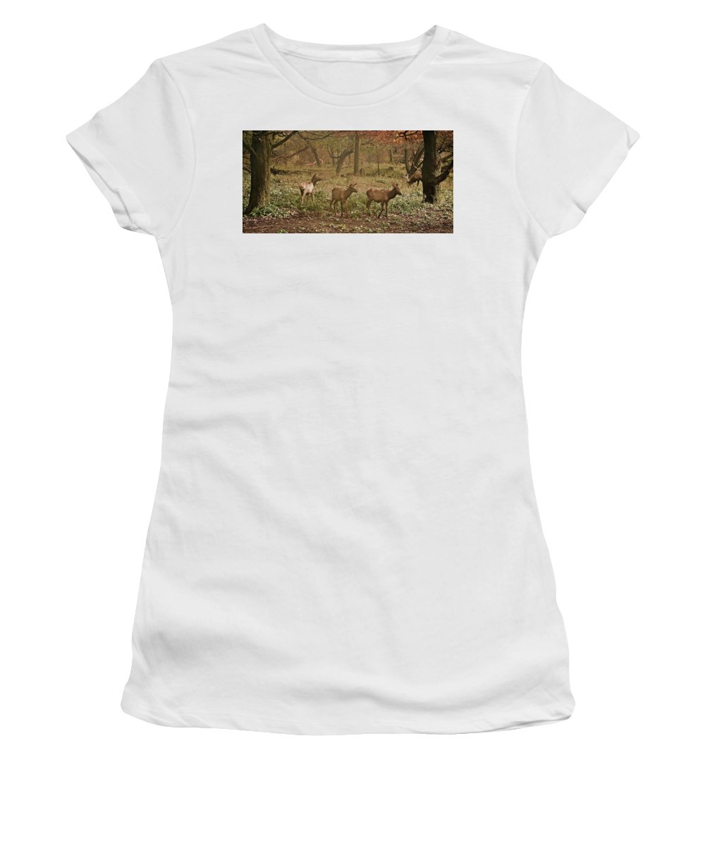 Elk Women's T-Shirt (Athletic Fit) featuring the photograph Elk In The Early Morning by Michael Peychich