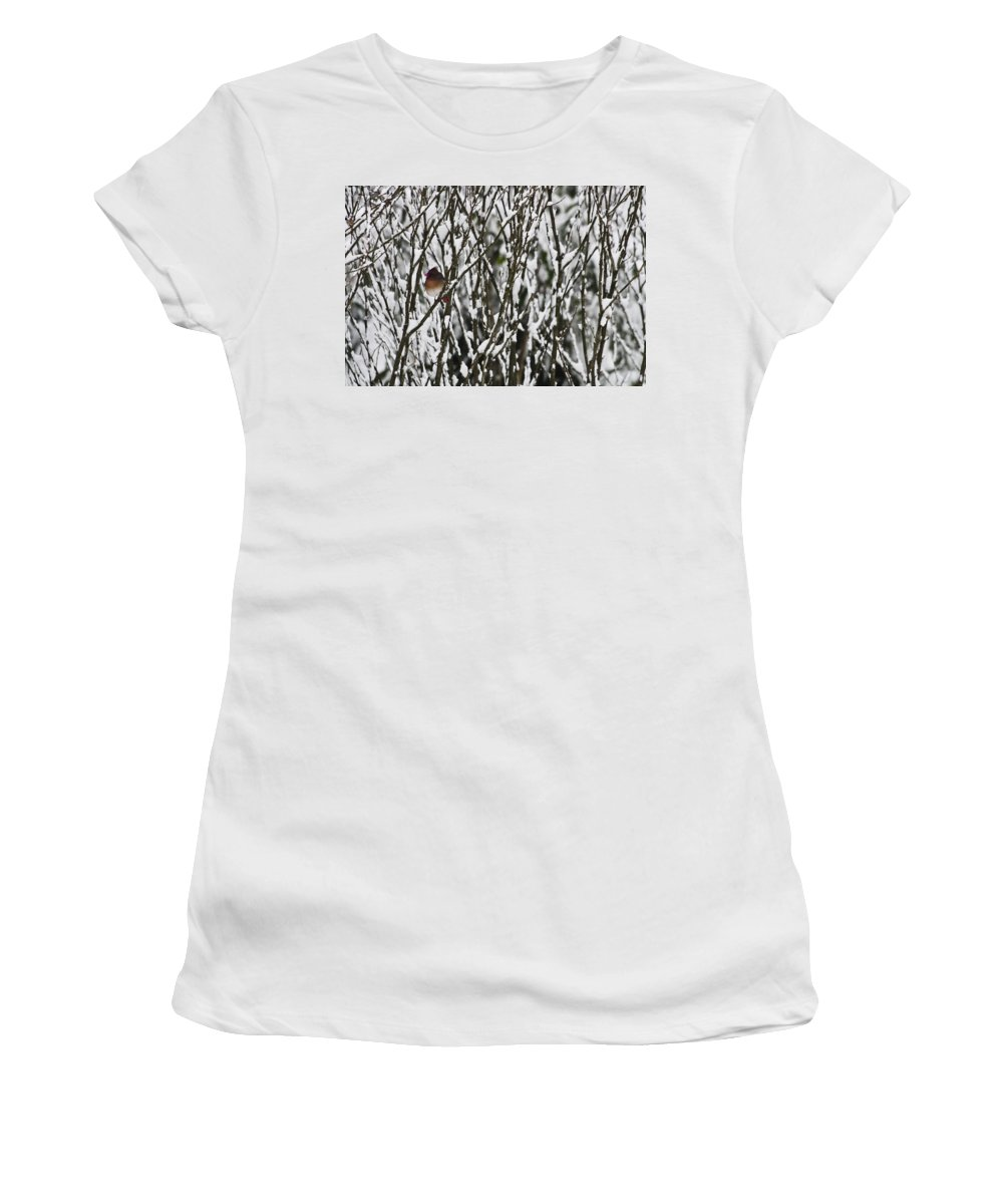 Cardinal Women's T-Shirt (Athletic Fit) featuring the photograph Female Cardinal In The Snow by Teresa Mucha
