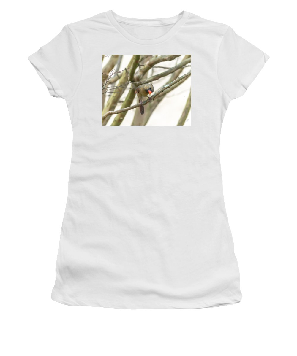 Bird Women's T-Shirt featuring the photograph Female Cardinal by Keith Smith