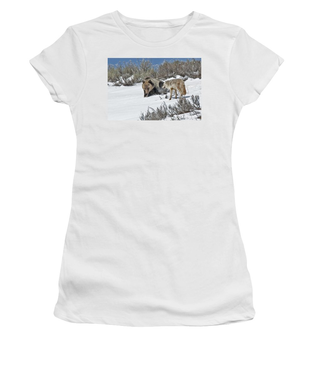 Grizzly Women's T-Shirt (Athletic Fit) featuring the photograph Grizzly With Coyote by Gary Beeler