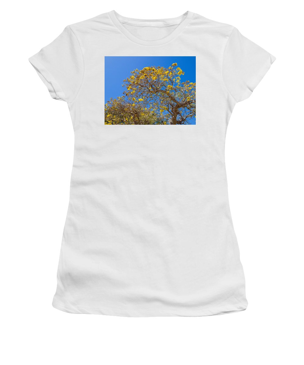 Florida; Tree; Plant; Flower; Flowering; Blossom; Blossoming; Jerusalem; Thorn; Possom; Mexican; Pal Women's T-Shirt (Athletic Fit) featuring the photograph Jerusalem Thorn Tree by Allan Hughes