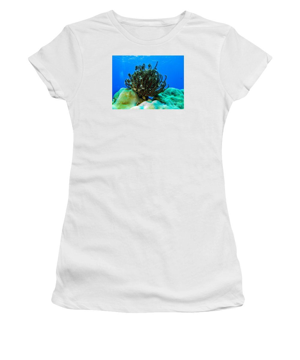 Coral Women's T-Shirt (Athletic Fit) featuring the photograph Kosrae Crinoid by Dan Norton