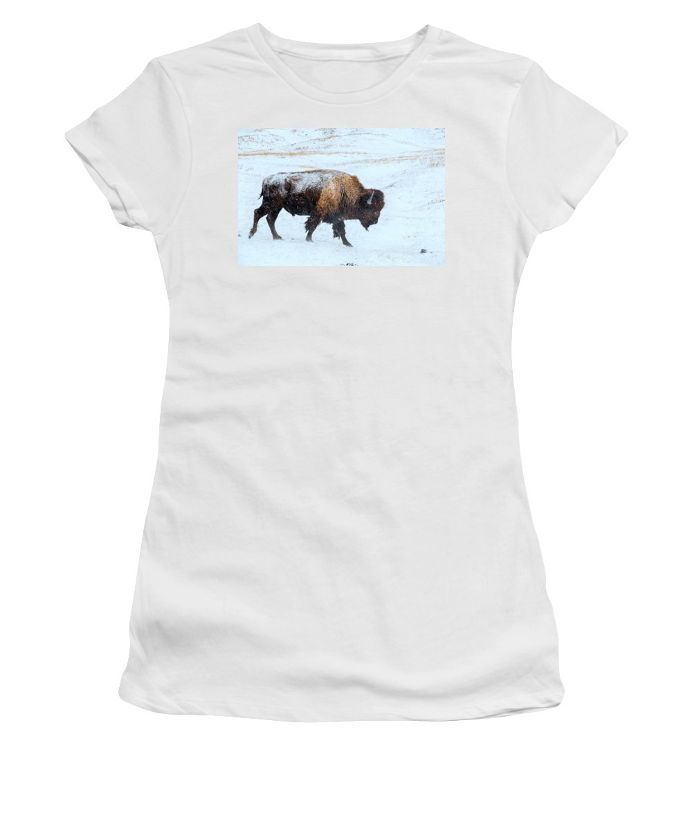 Buffalo Women's T-Shirt (Athletic Fit) featuring the photograph Loner by Derald Gross