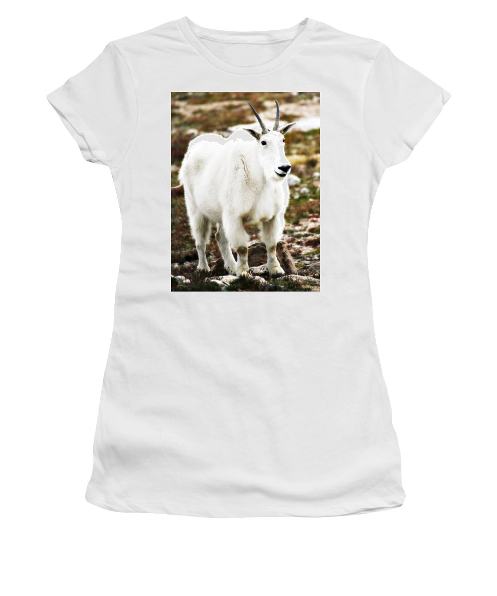 Animal Women's T-Shirt (Athletic Fit) featuring the photograph Mountain Goat by Marilyn Hunt