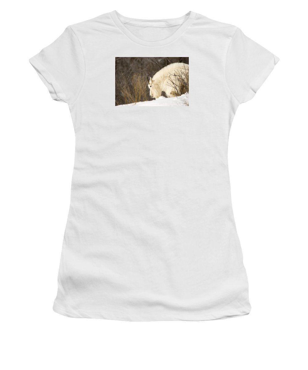 Mountain Goat Women's T-Shirt (Athletic Fit) featuring the photograph Mountain Goat by Sheryl Saxton