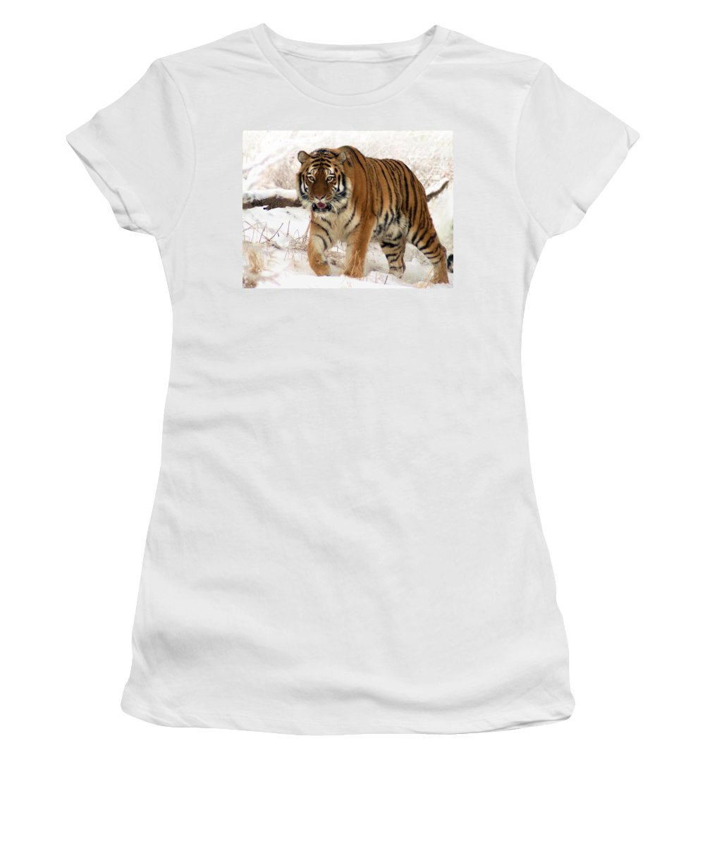 Tiger Women's T-Shirt (Athletic Fit) featuring the photograph Orange In Winter by Bill Stephens