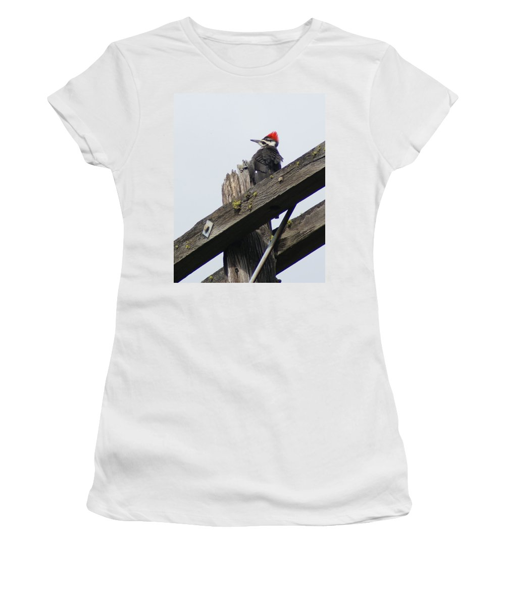 Birds Women's T-Shirt (Athletic Fit) featuring the photograph Pileated Woodpecker On A Power Pole by Ben Upham III