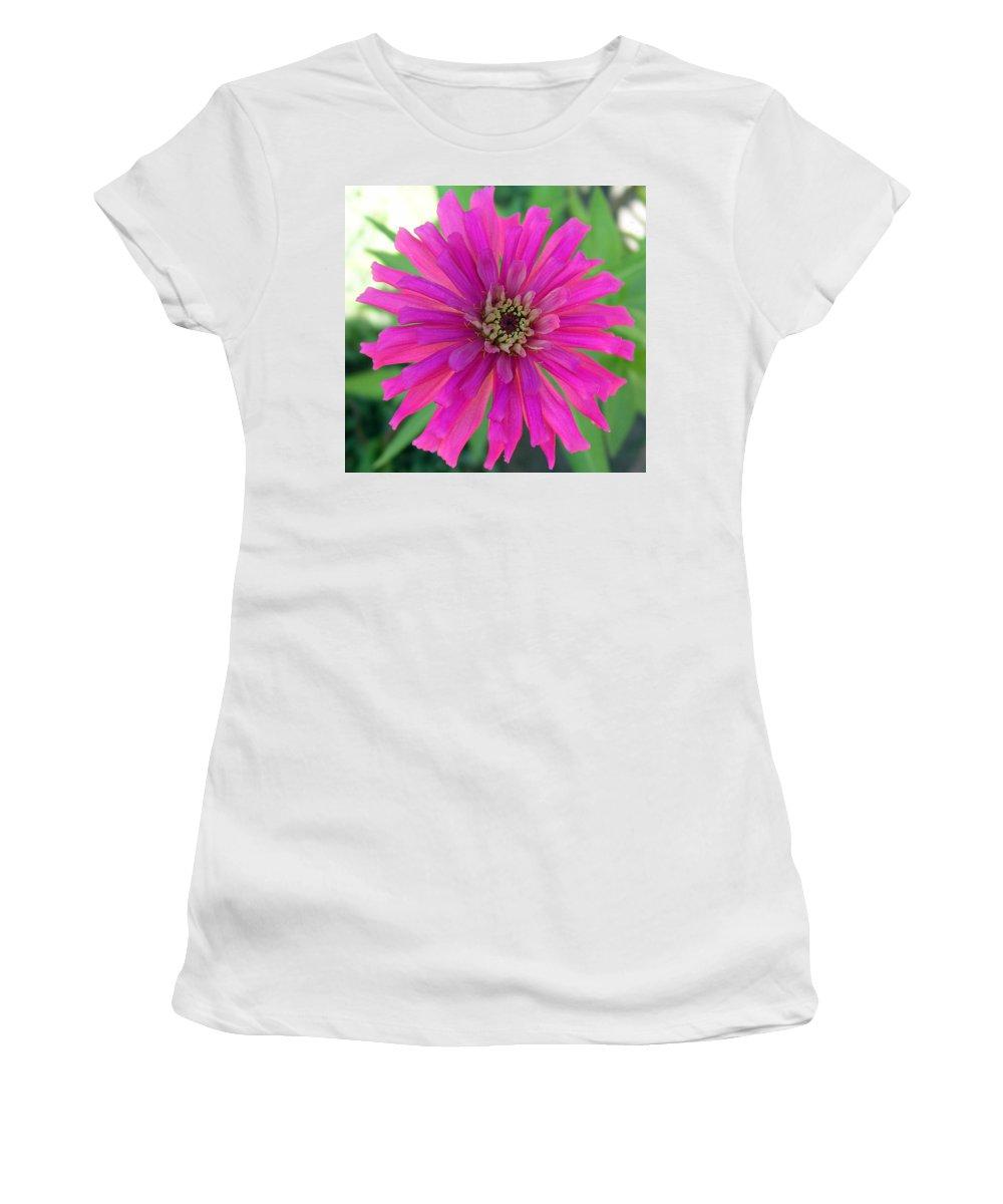 Zinnia; Flower; Pink; Translucent; Transparent; Florida; Petals; Garden; Zinnia; Agustifolia; Flower Women's T-Shirt (Athletic Fit) featuring the photograph Pink Zinnia In Florida by Allan Hughes