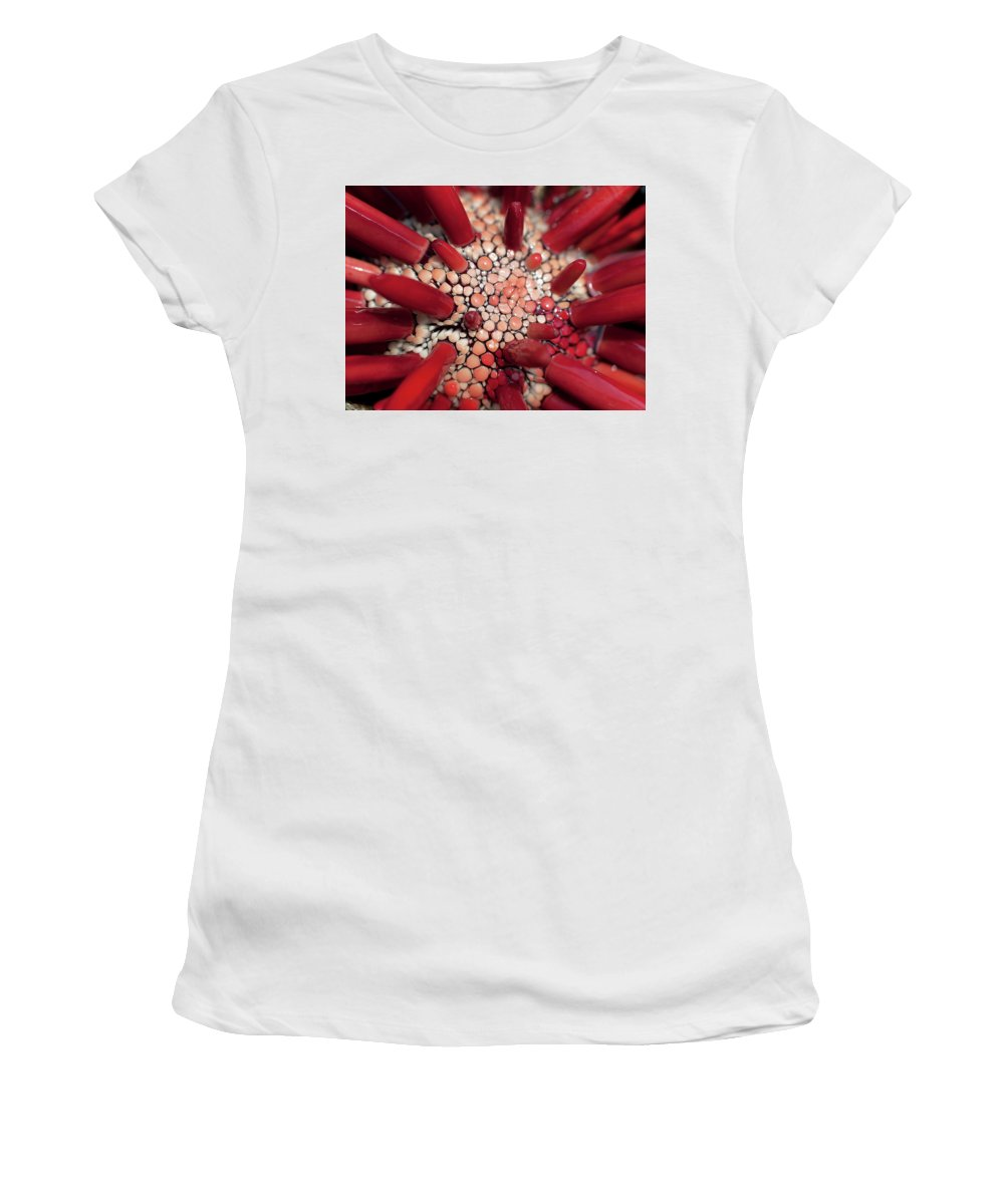 Pencil Urchin Women's T-Shirt featuring the photograph Red Pencil Urchin by Christopher Johnson