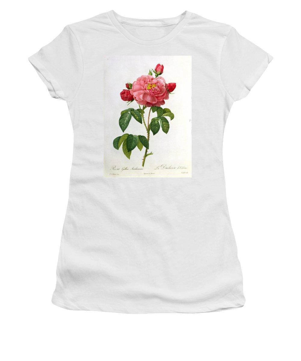 Rosa Women's T-Shirt featuring the drawing Rosa Gallica Aurelianensis by Pierre Joseph Redoute
