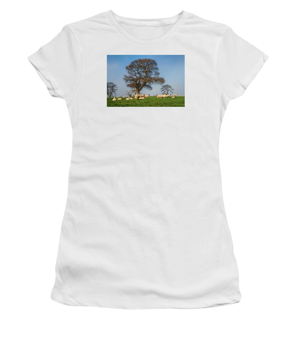 Sheep Women's T-Shirt (Athletic Fit) featuring the photograph Sheep In Somerset by Susie Peek
