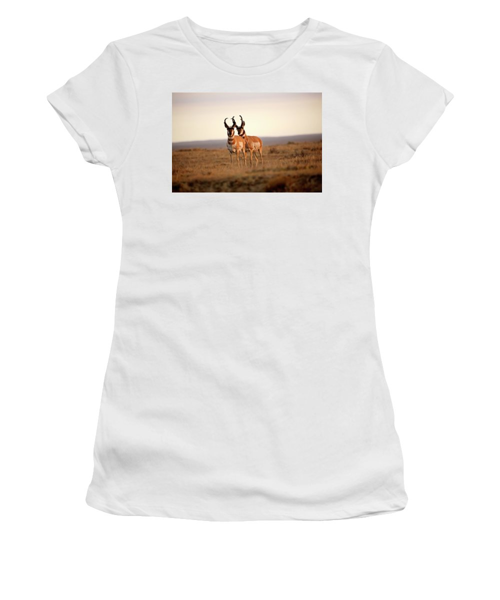 Pronghorn Antelope Women's T-Shirt featuring the digital art Two Male Pronghorn Antelopes In Alberta by Mark Duffy