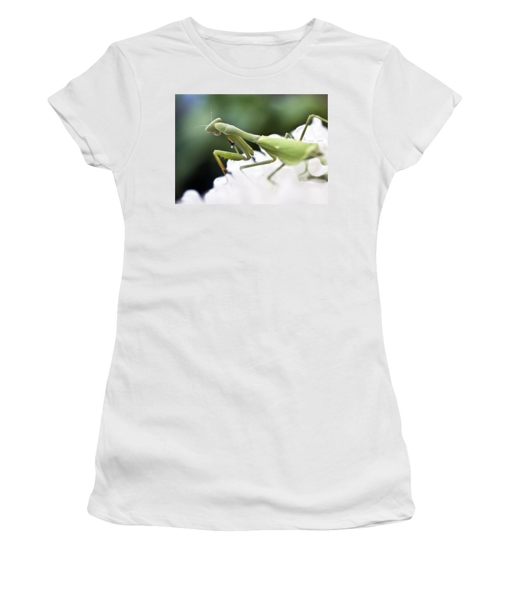 Animals Women's T-Shirt (Athletic Fit) featuring the photograph Watch Me Prey by Norman Andrus