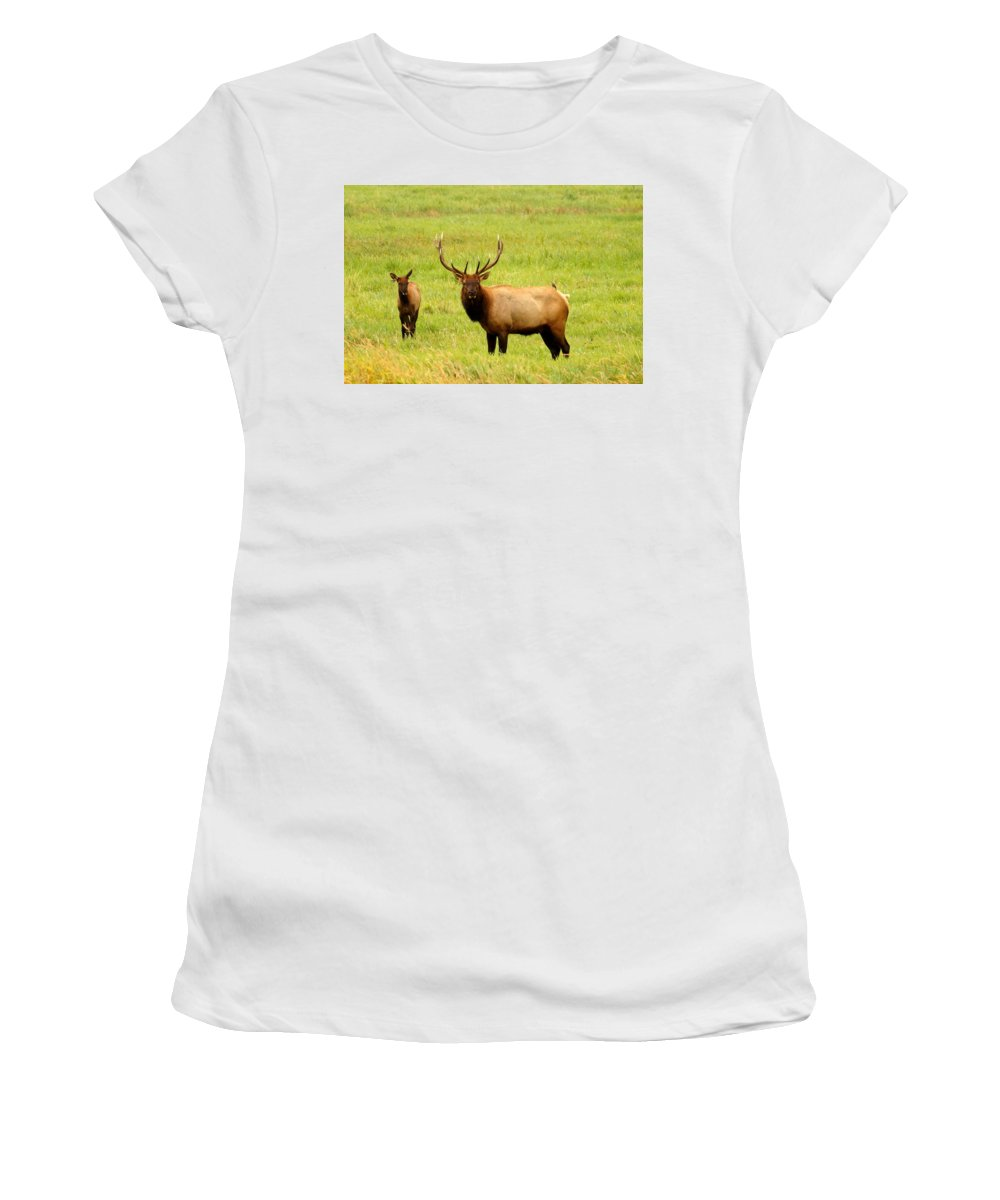 Animal Women's T-Shirt (Athletic Fit) featuring the photograph What Are You Looking At by Beth Collins