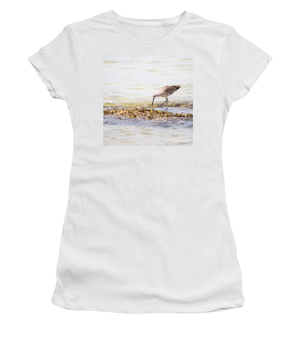 Willet Women's T-Shirt featuring the photograph Willet Set 4 Of 4 By Darrell Hutto by J Darrell Hutto