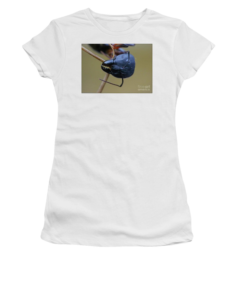 Macro Women's T-Shirt (Athletic Fit) featuring the photograph Working Hard by Lucky Jaiswal
