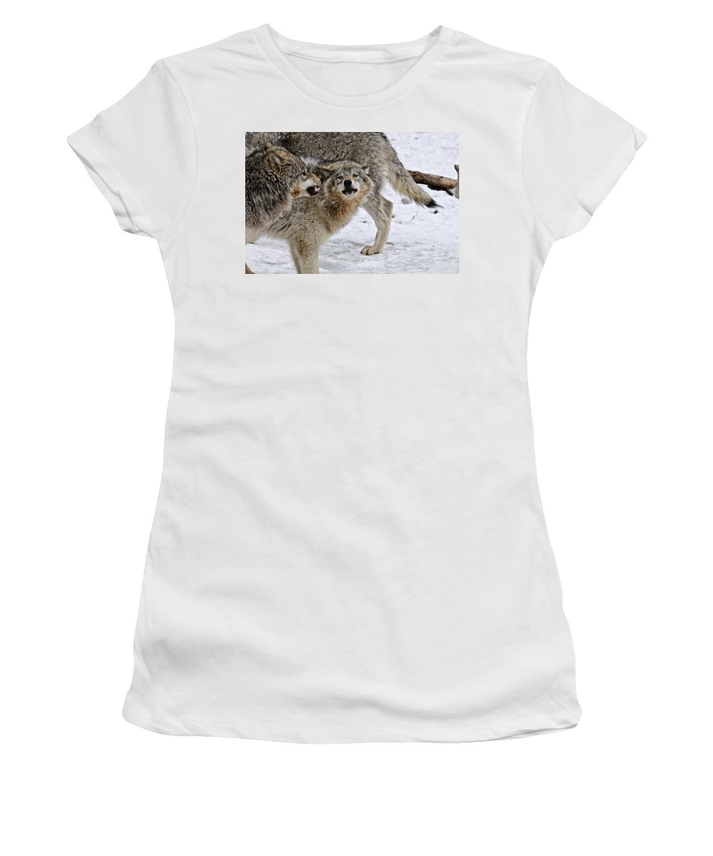 Michael Cummings Women's T-Shirt (Athletic Fit) featuring the photograph Yes Dear by Michael Cummings