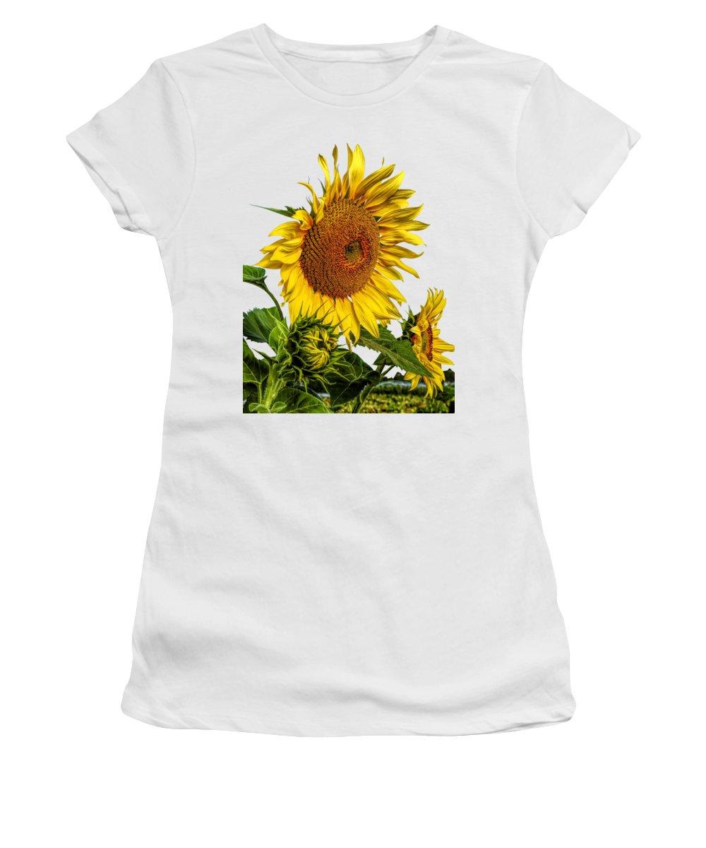 Sunflower Seeds Photographs Women's T-Shirts