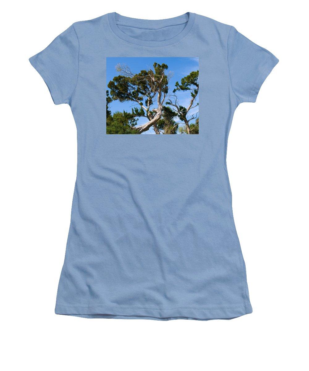 Cedar; Cedars; Tree; Florida; Timucuan; Indian; Mound; Shell; Midden; Oak; Hill; Flora; Branch; Weat Women's T-Shirt (Athletic Fit) featuring the photograph Florida Cedar Tree by Allan Hughes