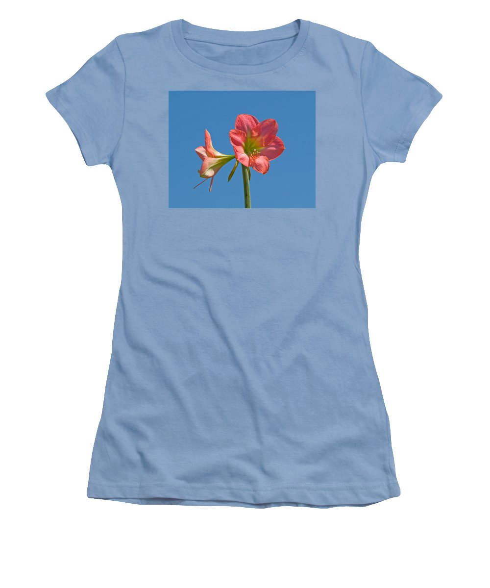 Hippeastrum; Amaryllidaceae; Belladonna; Lily; Amaryllis; Flower; Flowering; Plant; Bulb; Pot; Garde Women's T-Shirt (Athletic Fit) featuring the photograph Pink Amaryllis Flowering In Spring by Allan Hughes