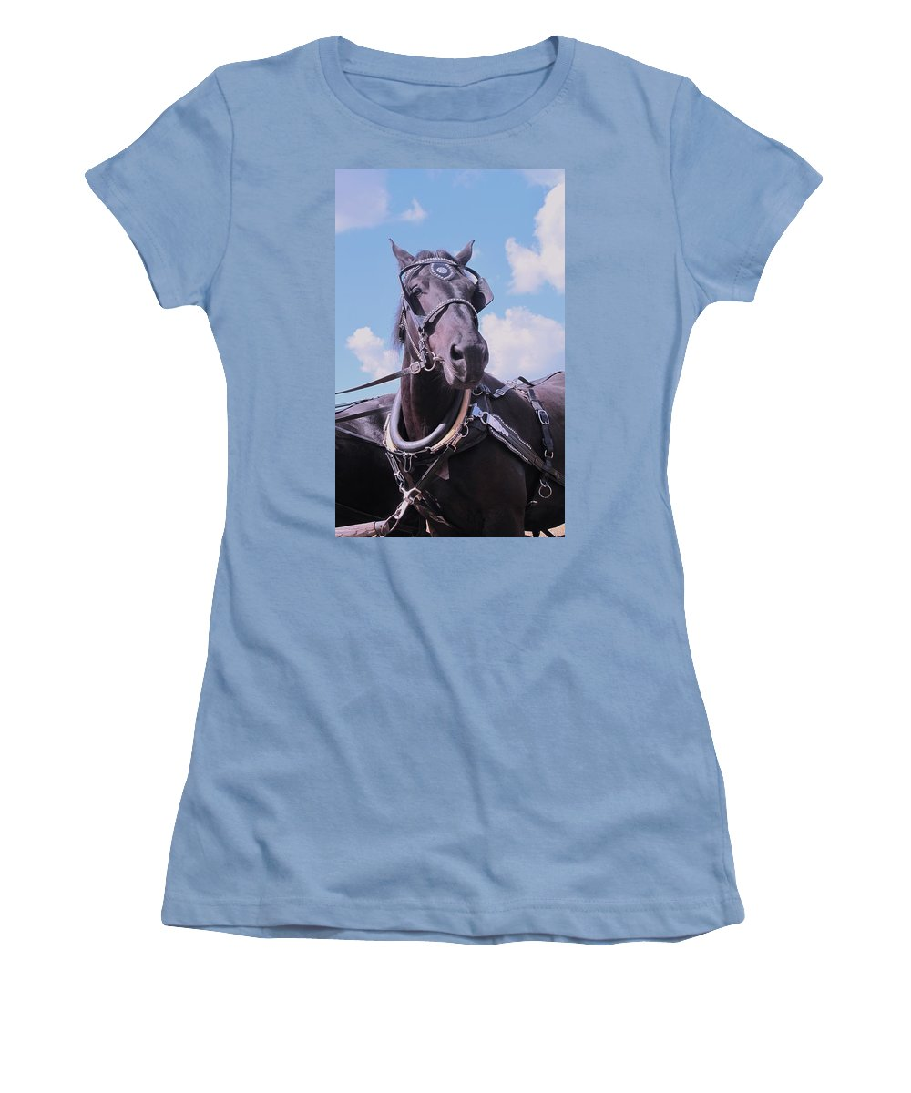 Percheron Women's T-Shirt (Athletic Fit) featuring the photograph Yes I Am The Most Beautiful by Ian MacDonald