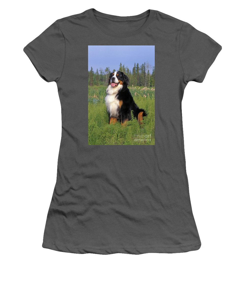 Bernese Mountain Dog Women's T-Shirt (Athletic Fit) featuring the photograph Bernese Mountain Dog by Rolf Kopfle