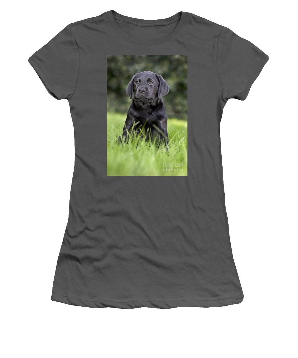 Labrador Retriever Women's T-Shirt (Athletic Fit) featuring the photograph Black Labrador Puppy by Johan De Meester